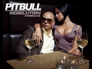 Wallpaper – Pitbull