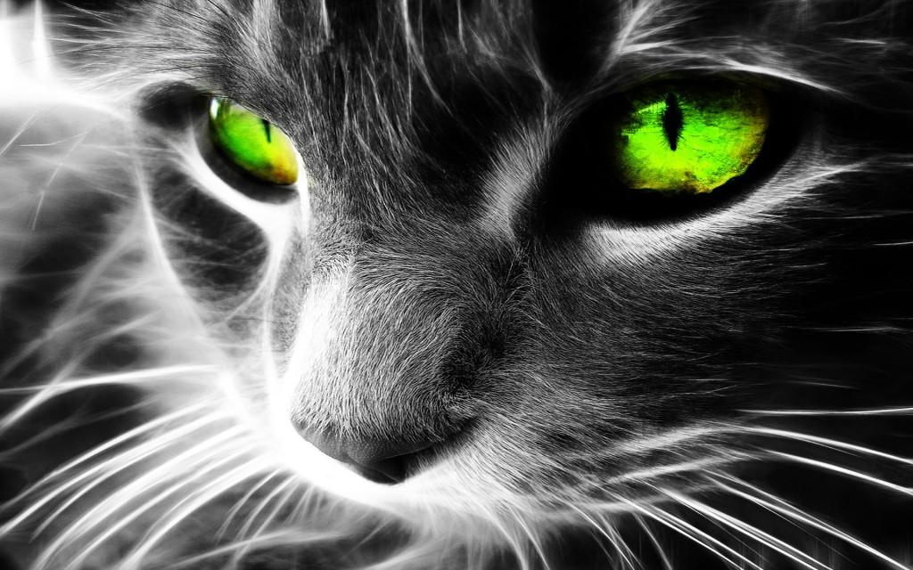 Wallpaper – HD cat